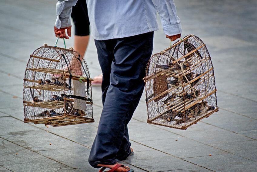 Kambodscha: Die Vogelverkäufer am Tonle Sap